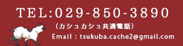 TEL:029-850-3890 (カシュカシュ共通電話)